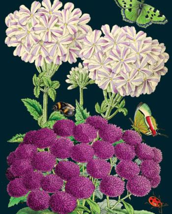 Madame Treacle Botanical greeting Card